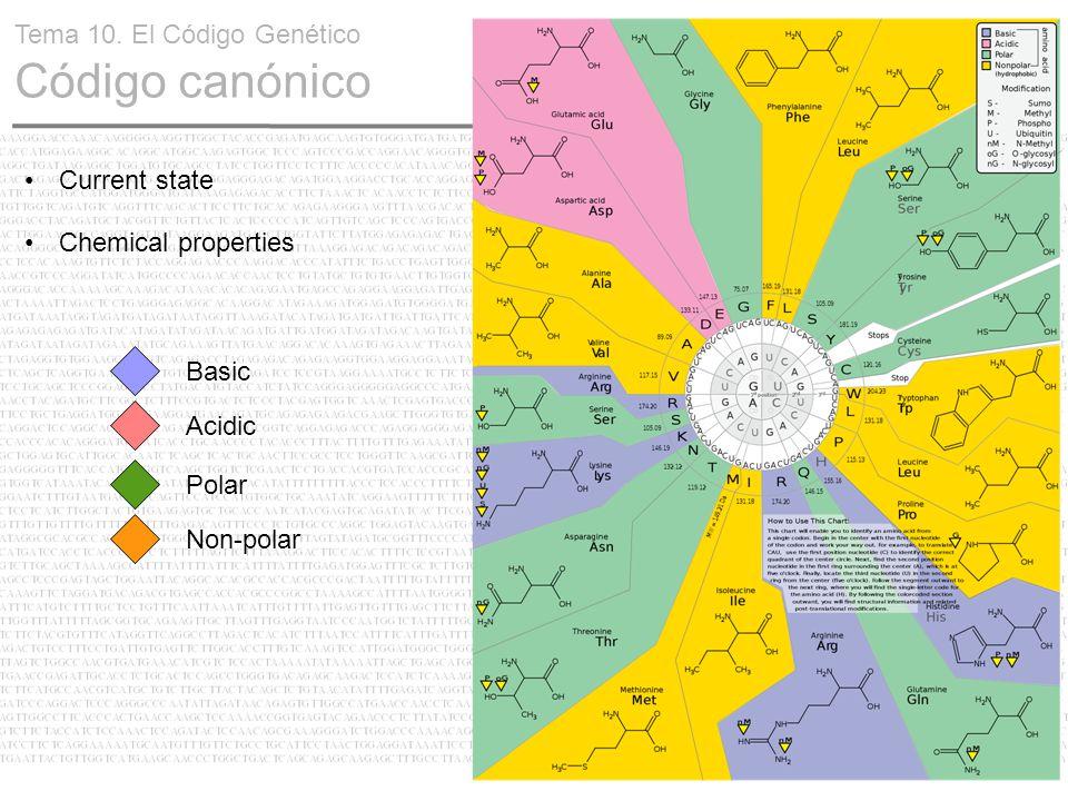 14 Current state Chemical properties Basic Acidic Polar Non-polar Tema 10. El Código Genético Código canónico