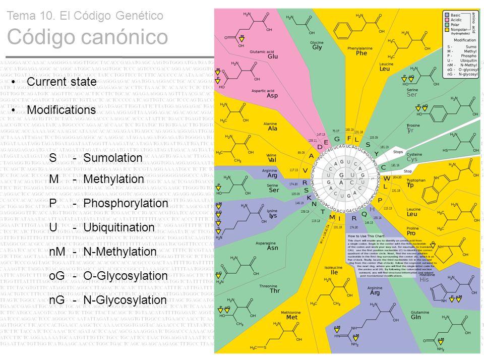 15 Tema 10. El Código Genético Código canónico Current state Modifications S- Sumolation M- Methylation P- Phosphorylation U- Ubiquitination nM- N-Met