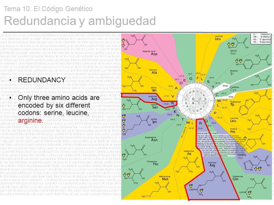 24 REDUNDANCY Only three amino acids are encoded by six different codons: serine, leucine, arginine. Tema 10. El Código Genético Redundancia y ambigue