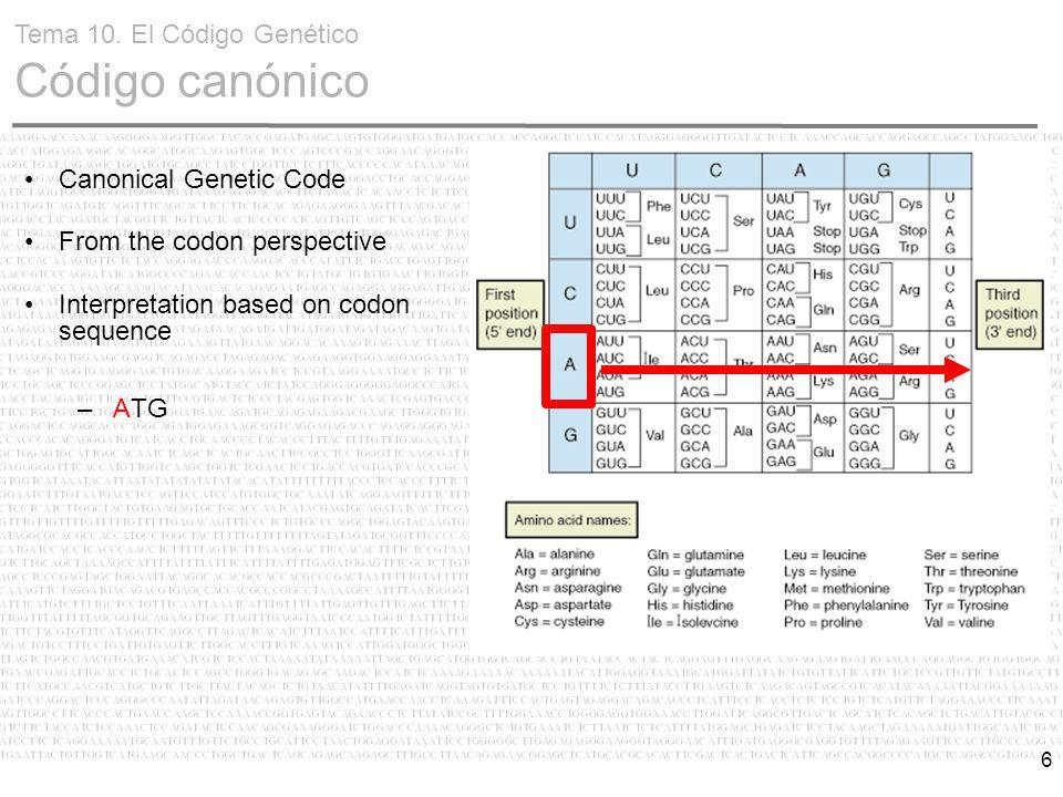 6 Canonical Genetic Code From the codon perspective Interpretation based on codon sequence – ATG Tema 10. El Código Genético Código canónico