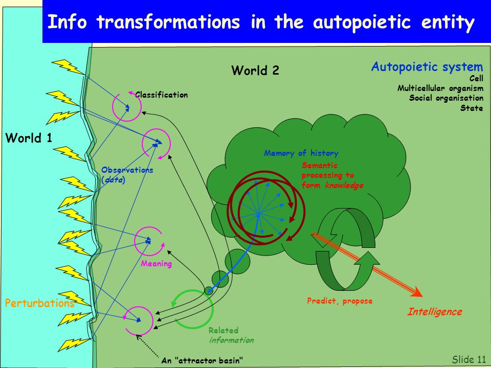 Slide 11 Info transformations in the autopoietic entity World 1 Autopoietic system Cell Multicellular organism Social organisation State Perturbations