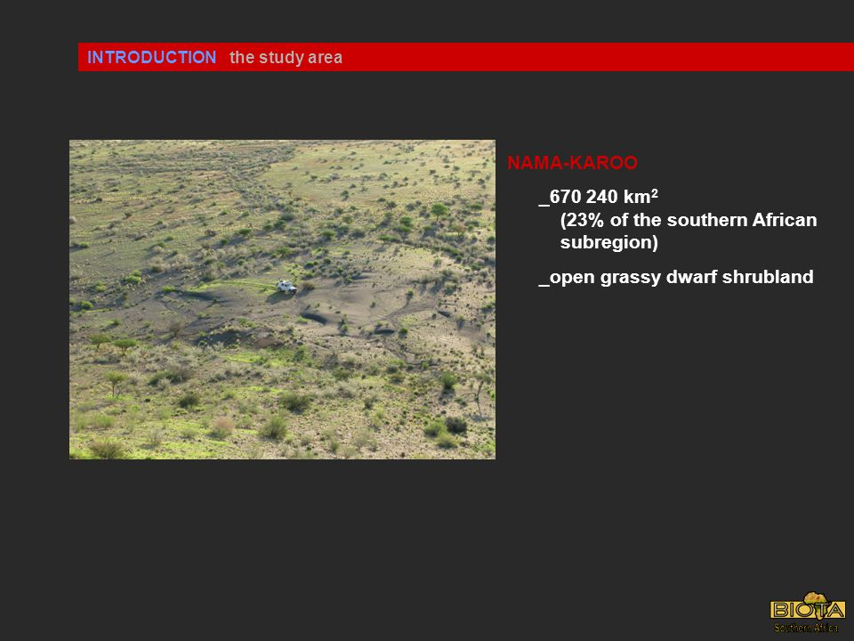 INTRODUCTION NAMA-KAROO _670 240 km 2 (23% of the southern African subregion) _open grassy dwarf shrubland the study area