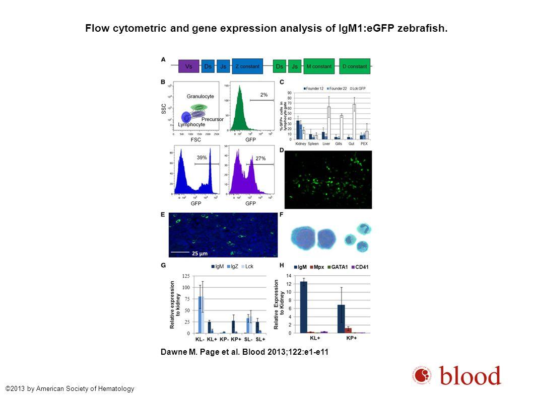 IgM expression during development.Dawne M. Page et al.