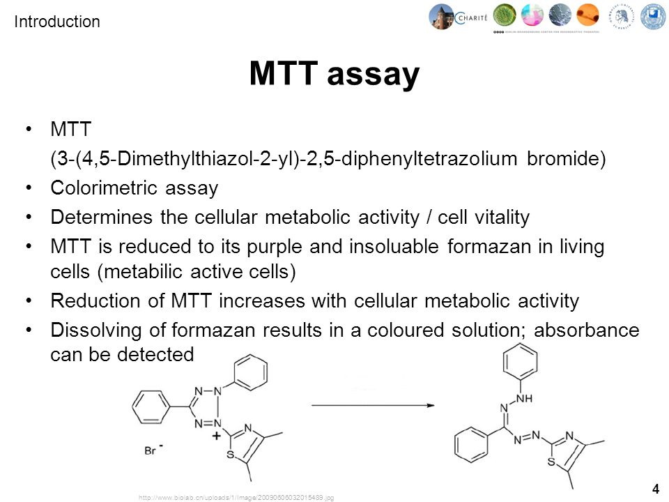 4 MTT assay MTT (3-(4,5-Dimethylthiazol-2-yl)-2,5-diphenyltetrazolium bromide) Colorimetric assay Determines the cellular metabolic activity / cell vitality MTT is reduced to its purple and insoluable formazan in living cells (metabilic active cells) Reduction of MTT increases with cellular metabolic activity Dissolving of formazan results in a coloured solution; absorbance can be detected http://www.biolab.cn/uploads/1/Image/20090606032015489.jpg Introduction