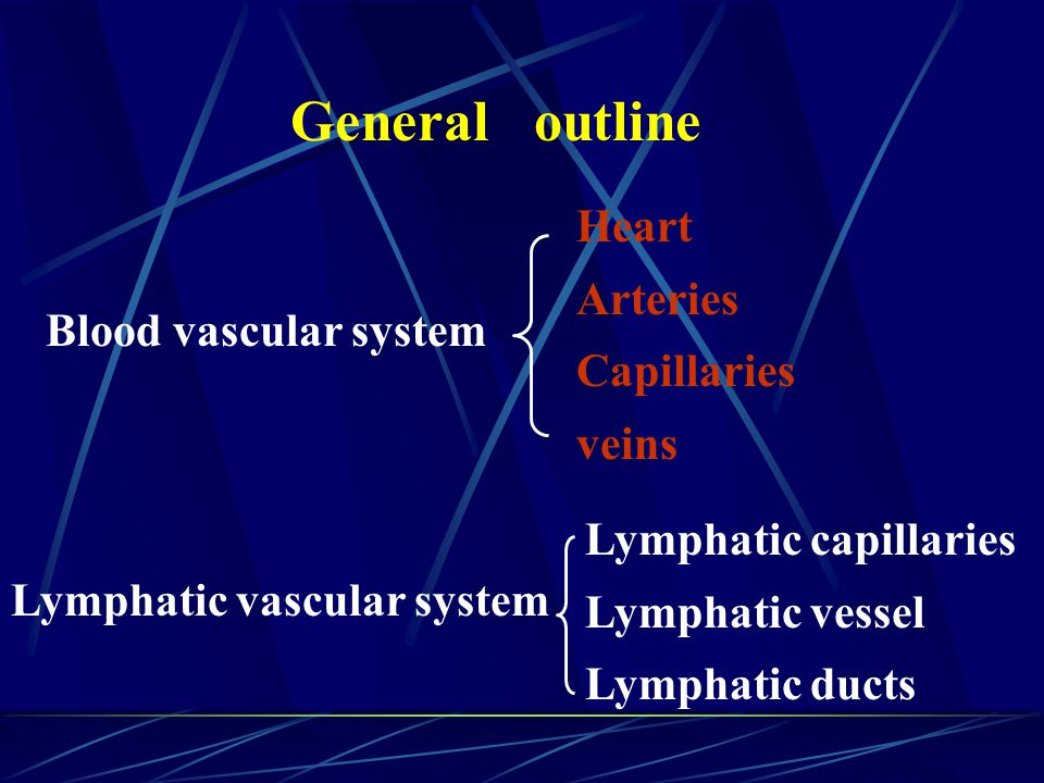 General outline Blood vascular system Heart Arteries Capillaries veins Lymphatic vascular system Lymphatic capillaries Lymphatic vessel Lymphatic duct