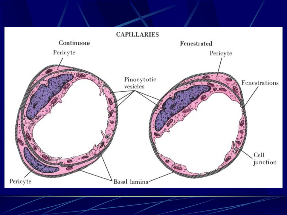 Continuous capillary