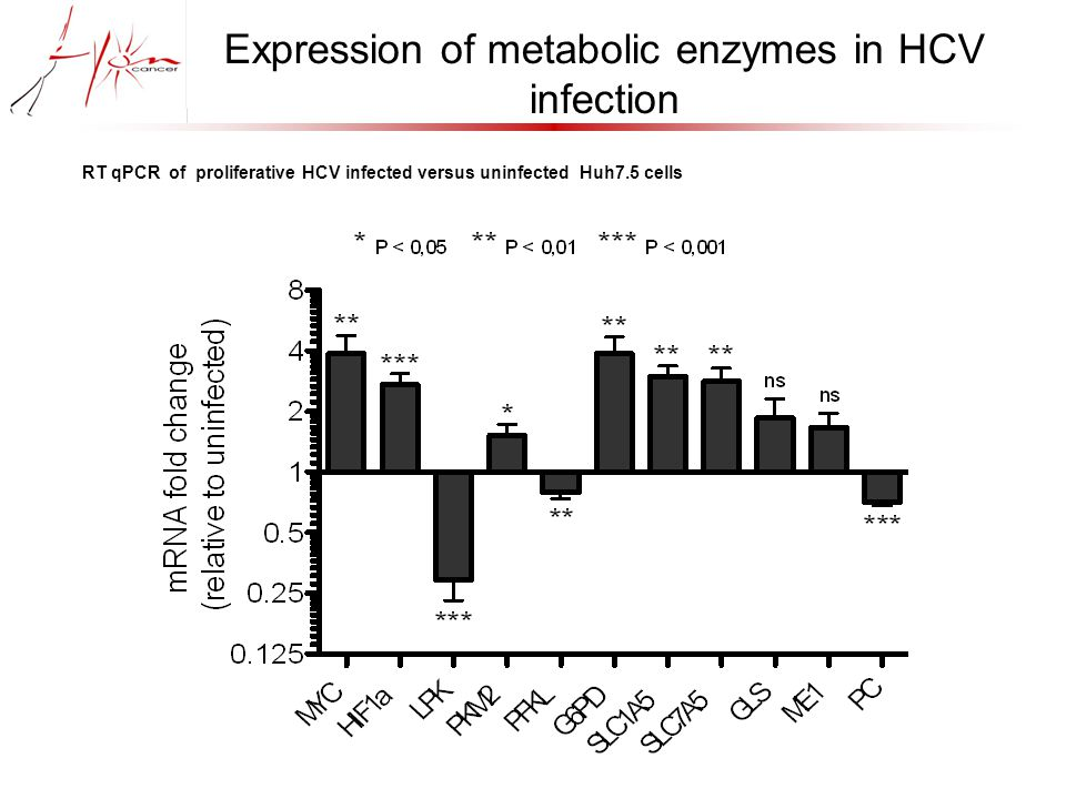 Expression of metabolic enzymes in HCV infection RT qPCR of proliferative HCV infected versus uninfected Huh7.5 cells