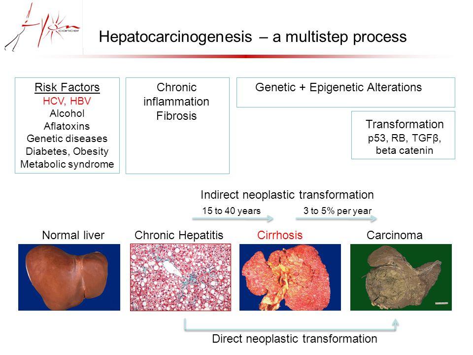 Conclusions.02-.02- H2O2H2O2.02-.02- H 2 O + 0 2 TCA cycle NAD + NADH, H + H2O2H2O2 IV III II I mitochondrion cytosol extracellular ER E1E2 low density HCV virion vLDL Core HCV genome NS5B HCV replication and morphogenesis GSH GSSG GSH GSSG GR NADPH NADP + glucose G6P Pentose Phosphate Pathway PEP Glycolysis glutamine pyruvate Phospholipid peroxidation Constant turn over GPx4 NS5A