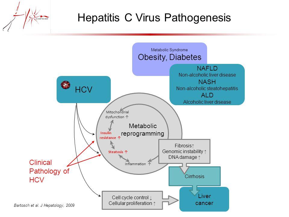 Huh7.5 seeding Oxidative stress Measurement (H 2 O 2 using DCFDA / O 2.- using DHE) HCVcc infection Day 1 p.i.