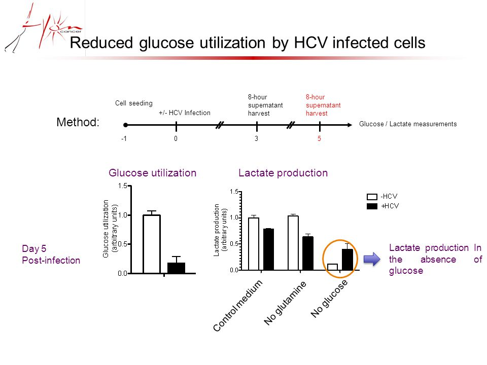  Establishment of a Huh7.5 cell line silenced for MYC  Strong decrease of HCV RNA level in shMYC cell line despite a reduction of only 60% in MYC mRNA levels (*)  MYC seems to be essential for HCV replication 24h 48h shCTRL shMYC  MYC mRNA level c Myc required for HCV replication