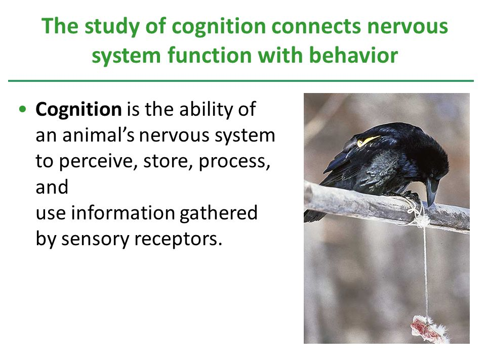 Cognition is the ability of an animal's nervous system to perceive, store, process, and use information gathered by sensory receptors.