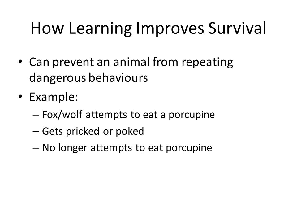 How Learning Improves Survival Can prevent an animal from repeating dangerous behaviours Example: – Fox/wolf attempts to eat a porcupine – Gets pricked or poked – No longer attempts to eat porcupine