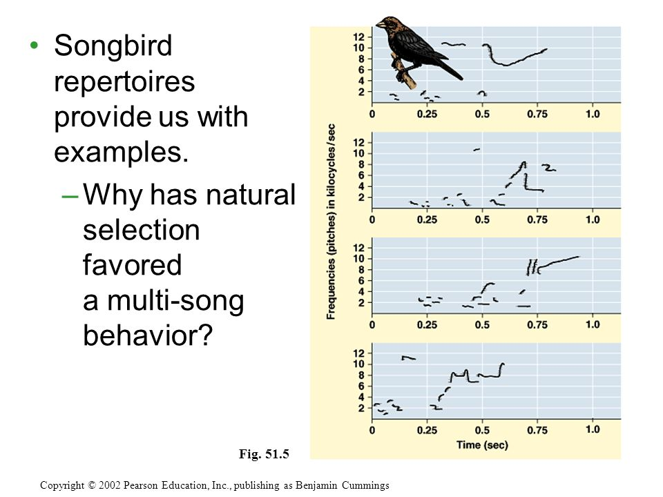 Songbird repertoires provide us with examples.