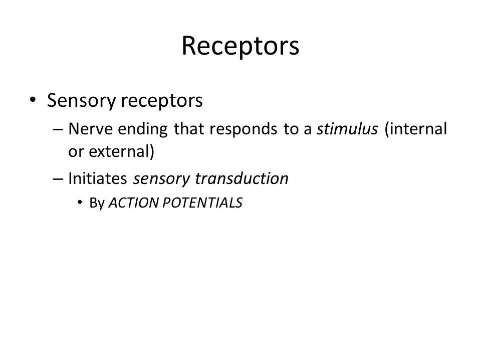 Neurons Sensory Neurons – Converts external stimuli of the environment into internal stimuli E.g.
