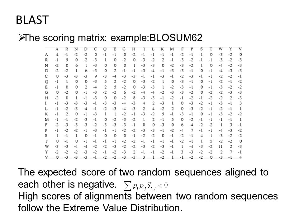 BLAST  The scoring matrix: example:BLOSUM62 The expected score of two random sequences aligned to each other is negative.