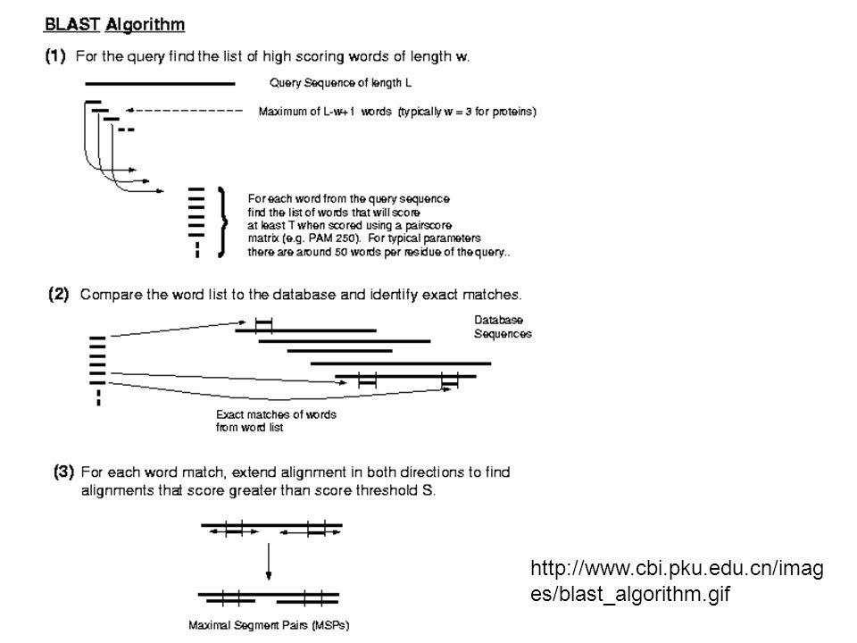 http://www.cbi.pku.edu.cn/imag es/blast_algorithm.gif