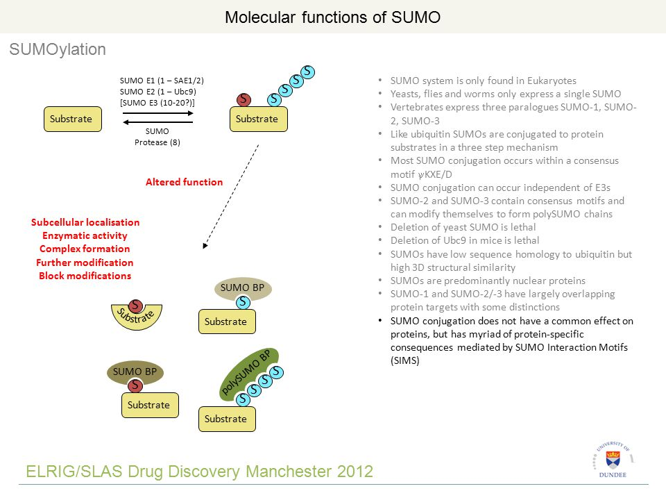 Cellular functions of SUMO TAP-SUMO-2 cells Purify SUMO from cells Identify and quantify proteins by quantitative mass spectrometry-based proteomics Identified a total of ~900 SUMO substrates Number of SUMO substrates Year SubstrateTAGSUMO ELRIG/SLAS Drug Discovery Manchester 2012 ~10% of cellular proteins are modified by SUMO Golebiowski et al Sci Signal.