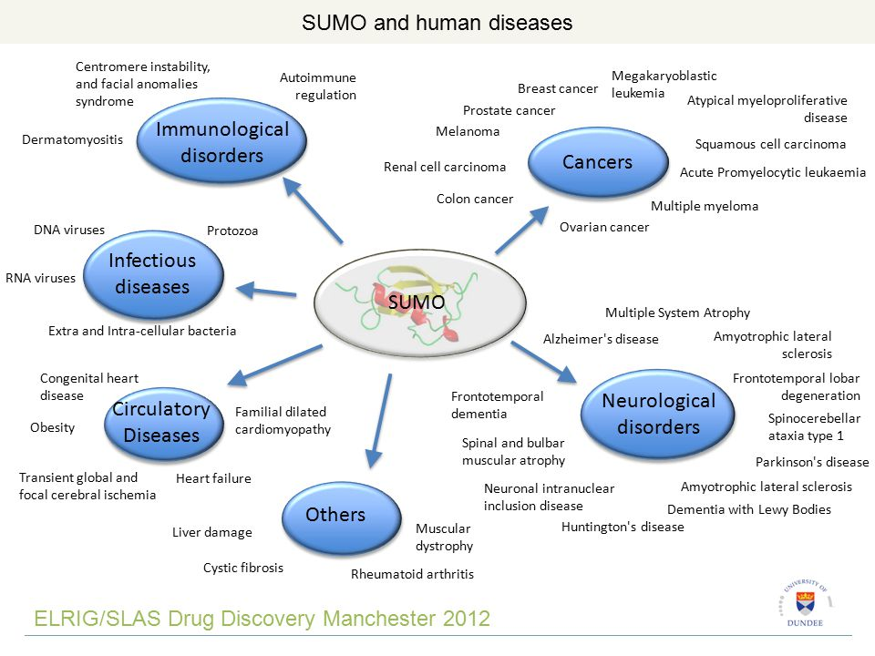 SUMO ELRIG/SLAS Drug Discovery Manchester 2012 SUMO and human diseases Immunological disorders Centromere instability, and facial anomalies syndrome Autoimmune regulation Dermatomyositis Infectious diseases DNA viruses Protozoa Extra and Intra-cellular bacteria RNA viruses Circulatory Diseases Transient global and focal cerebral ischemia Familial dilated cardiomyopathy Congenital heart disease Obesity Others Rheumatoid arthritis Liver damage Cystic fibrosis Muscular dystrophy Heart failure Neurological disorders Multiple System Atrophy Alzheimer s disease Frontotemporal dementia Spinal and bulbar muscular atrophy Huntington s disease Amyotrophic lateral sclerosis Frontotemporal lobar degeneration Spinocerebellar ataxia type 1 Neuronal intranuclear inclusion disease Dementia with Lewy Bodies Parkinson s disease Amyotrophic lateral sclerosis Cancers Megakaryoblastic leukemia Squamous cell carcinoma Colon cancer Acute Promyelocytic leukaemia Breast cancer Ovarian cancer Multiple myeloma Melanoma Prostate cancer Atypical myeloproliferative disease Renal cell carcinoma