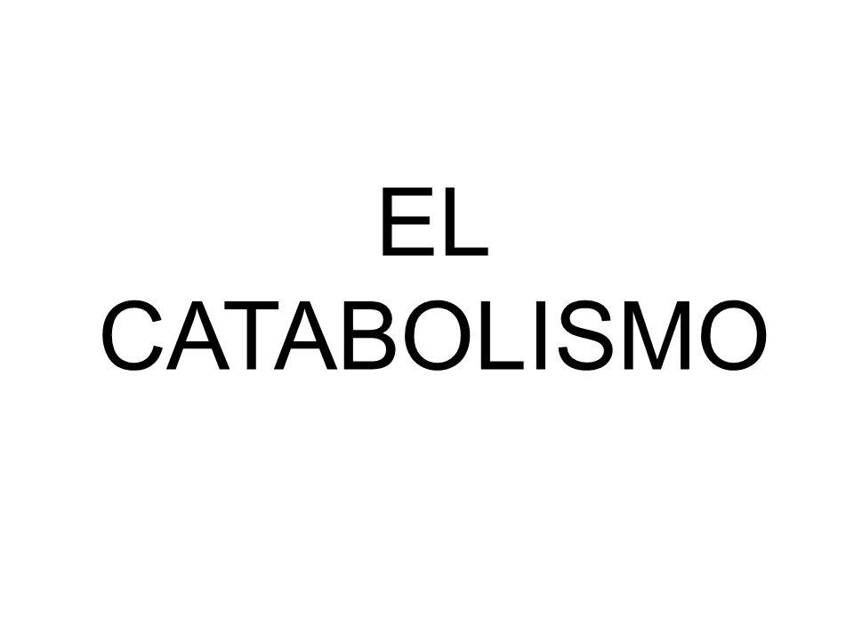 EL CATABOLISMO