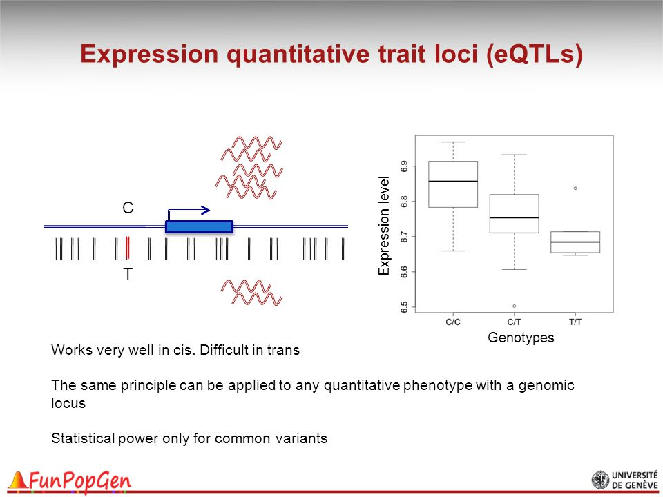 Expression quantitative trait loci (eQTLs) T C Genotypes Expression level Works very well in cis. Difficult in trans The same principle can be applied