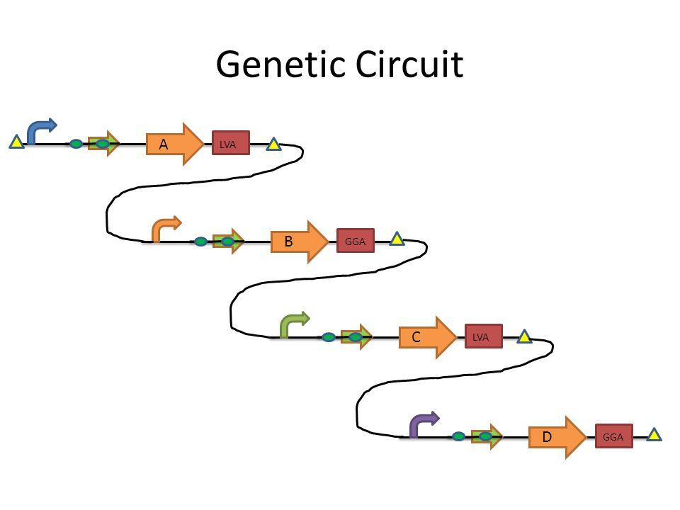Genetic Circuit A LVA B GGA C LVA D GGA