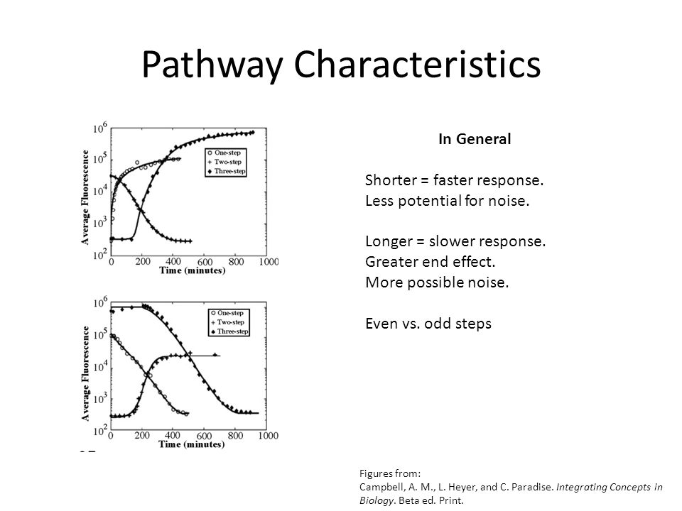 Pathway Characteristics In General Shorter = faster response. Less potential for noise. Longer = slower response. Greater end effect. More possible no