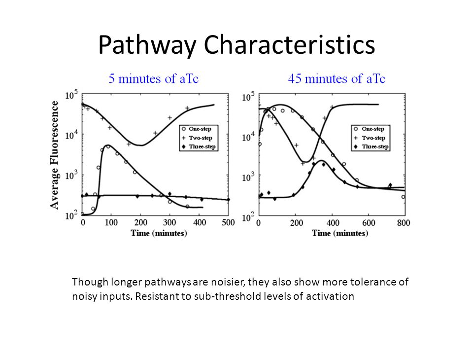 Pathway Characteristics Though longer pathways are noisier, they also show more tolerance of noisy inputs. Resistant to sub-threshold levels of activa