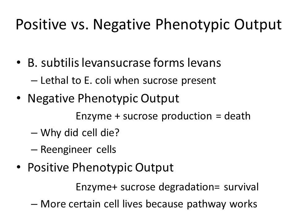 Positive vs. Negative Phenotypic Output B. subtilis levansucrase forms levans – Lethal to E. coli when sucrose present Negative Phenotypic Output Enzy