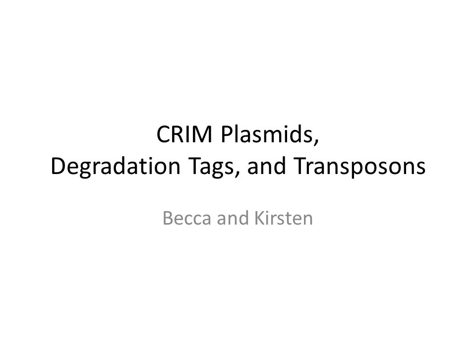 CRIM Plasmids, Degradation Tags, and Transposons Becca and Kirsten
