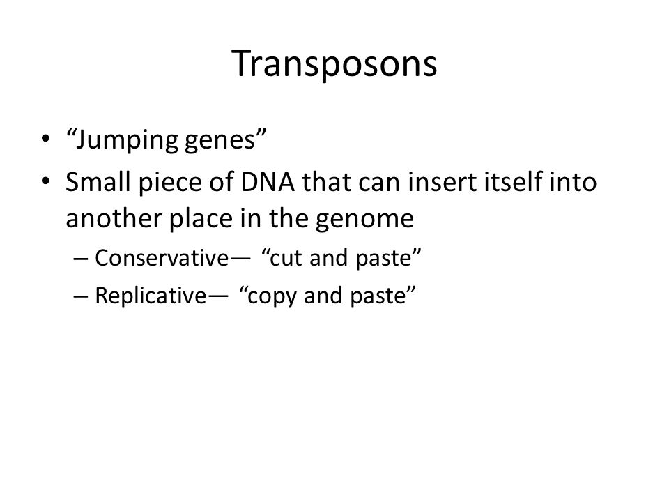 """Transposons """"Jumping genes"""" Small piece of DNA that can insert itself into another place in the genome – Conservative— """"cut and paste"""" – Replicative—"""