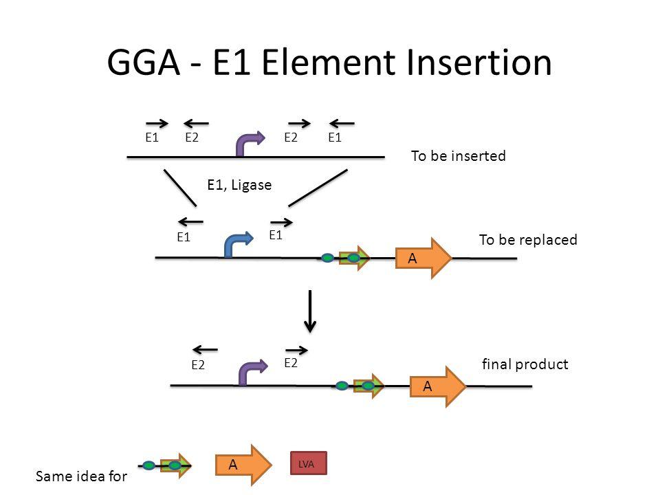 GGA - E1 Element Insertion A E2 E1 E1, Ligase A E2 LVA A To be inserted Same idea for To be replaced final product
