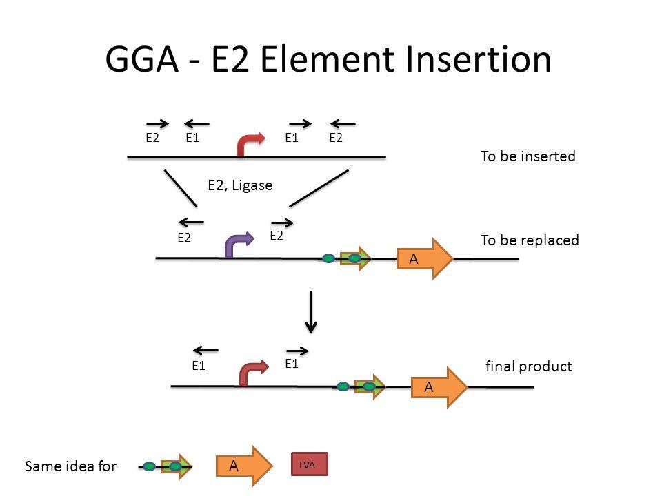 GGA - E2 Element Insertion A LVA A E1 E2 E2, Ligase A E1 Same idea for To be inserted To be replaced final product