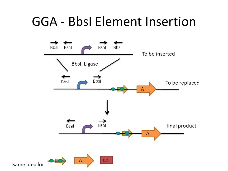GGA - BsaI Element Insertion A LVA A BbsI BsaI BsaI, Ligase A BbsI Same idea for To be inserted To be replaced final product