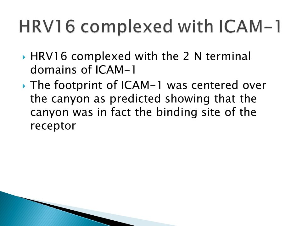  HRV16 complexed with the 2 N terminal domains of ICAM-1  The footprint of ICAM-1 was centered over the canyon as predicted showing that the canyon was in fact the binding site of the receptor