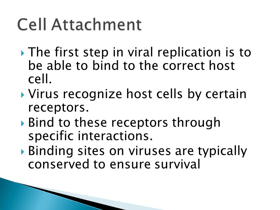  The first step in viral replication is to be able to bind to the correct host cell.