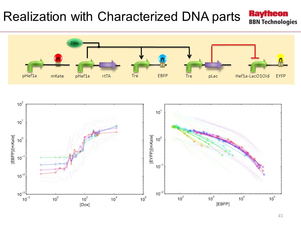 pHef1artTA EYFP Hef1a-LacO1Oid mKateTrepLac Dox EBFPTre Realization with Characterized DNA parts pHef1a 41
