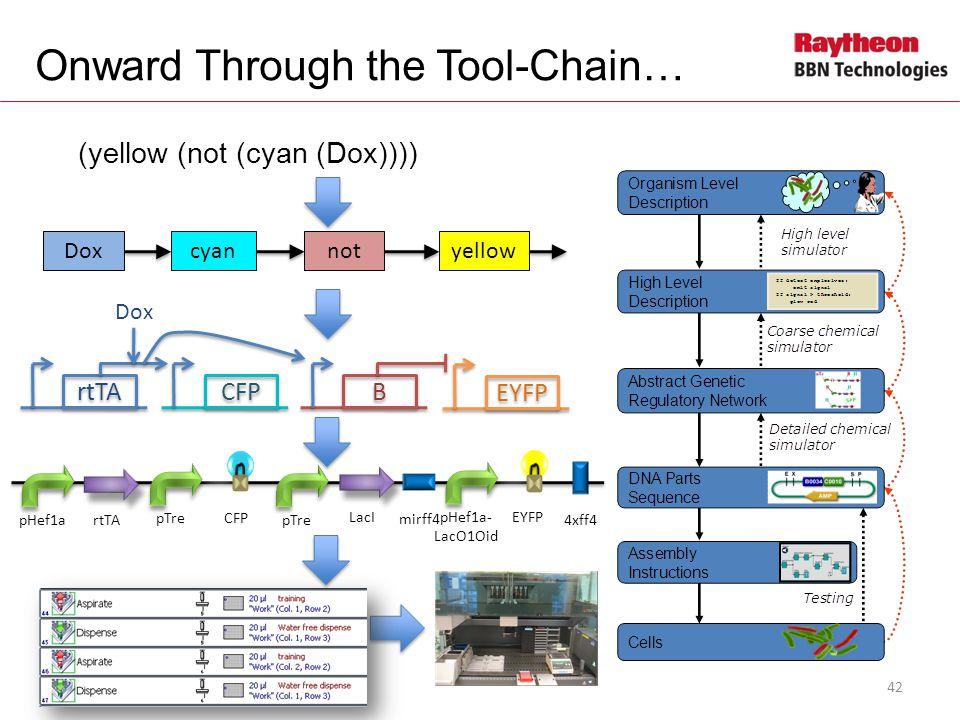Onward Through the Tool-Chain… (yellow (not (cyan (Dox)))) Doxcyannotyellow rtTA CFP B B EYFP Dox pHef1artTA pTreCFP pTre LacI pHef1a- LacO1Oid EYFP mirff4 4xff4 42