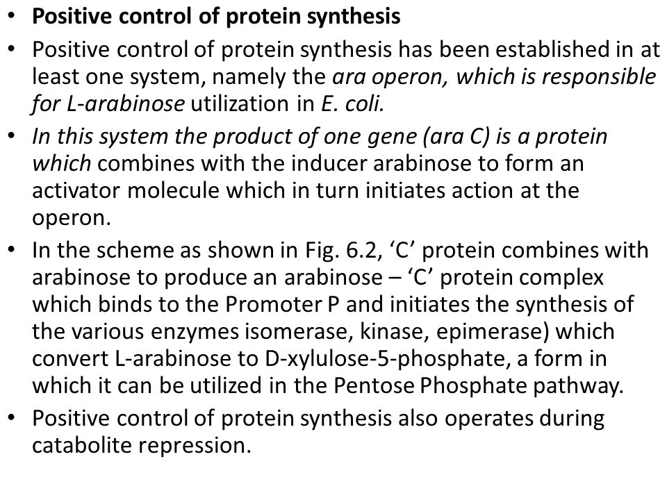 Positive control of protein synthesis Positive control of protein synthesis has been established in at least one system, namely the ara operon, which is responsible for L-arabinose utilization in E.