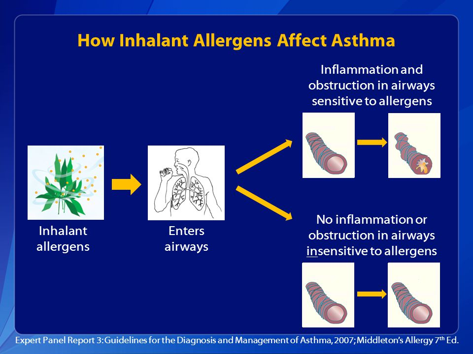 How Inhalant Allergens Affect Asthma Expert Panel Report 3: Guidelines for the Diagnosis and Management of Asthma, 2007; Middleton's Allergy 7 th Ed.