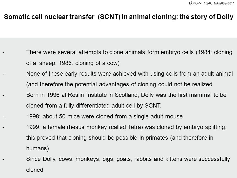 Somatic cell nuclear transfer (SCNT) in animal cloning: the story of Dolly -There were several attempts to clone animals form embryo cells (1984: cloning of a sheep, 1986: cloning of a cow) -None of these early results were achieved with using cells from an adult animal (and therefore the potential advantages of cloning could not be realized -Born in 1996 at Roslin Institute in Scotland, Dolly was the first mammal to be cloned from a fully differentiated adult cell by SCNT.