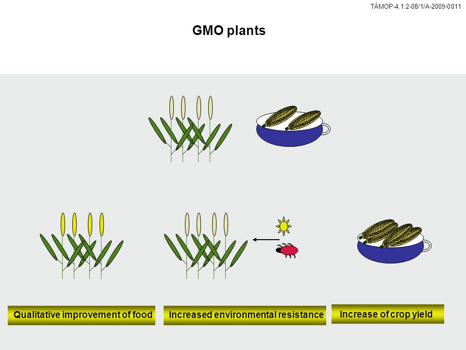 TÁMOP-4.1.2-08/1/A-2009-0011 GMO plants Increased environmental resistance Increase of crop yield Qualitative improvement of food