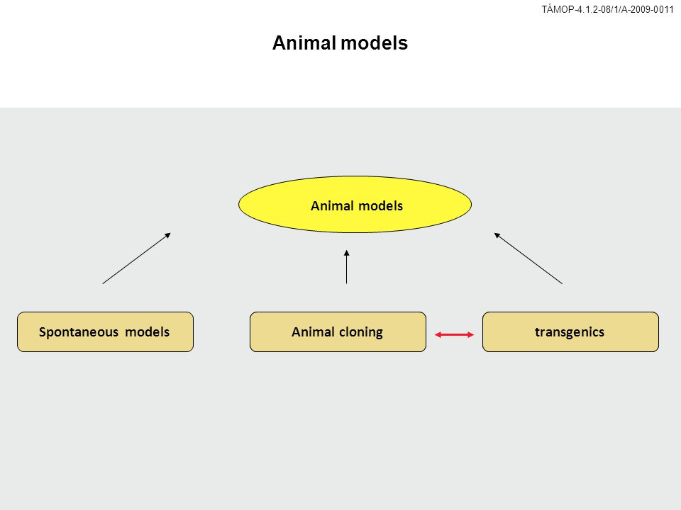 TÁMOP-4.1.2-08/1/A-2009-0011 Animal models Spontaneous modelsAnimal cloningtransgenics