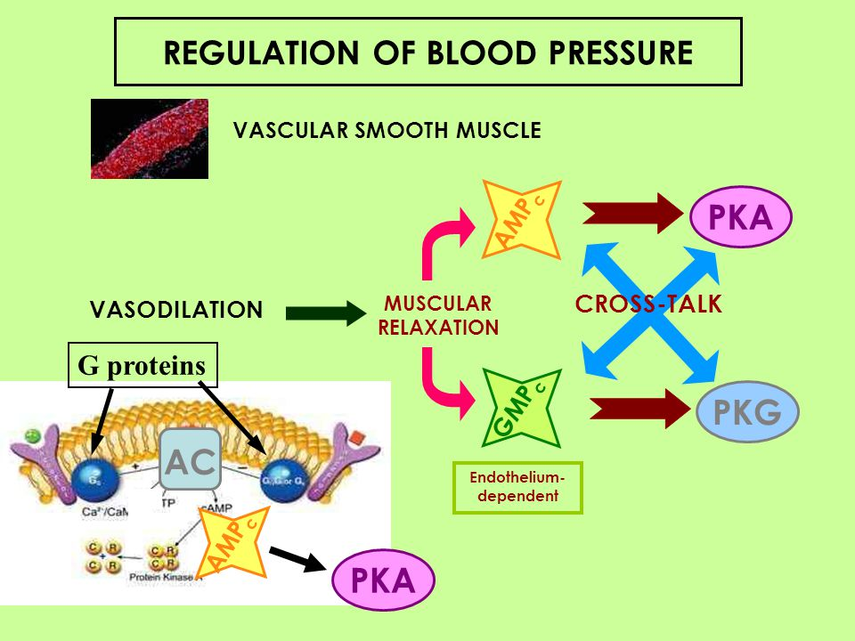 Effects of 2-hydroxyoleic acid treatment (600 mg/kg every 12 h) for 7 days on adenylyl cyclase (AC) activities in SHRs and WKY rat aortas How Oleic Acid in olive oil reduces blood pressure.