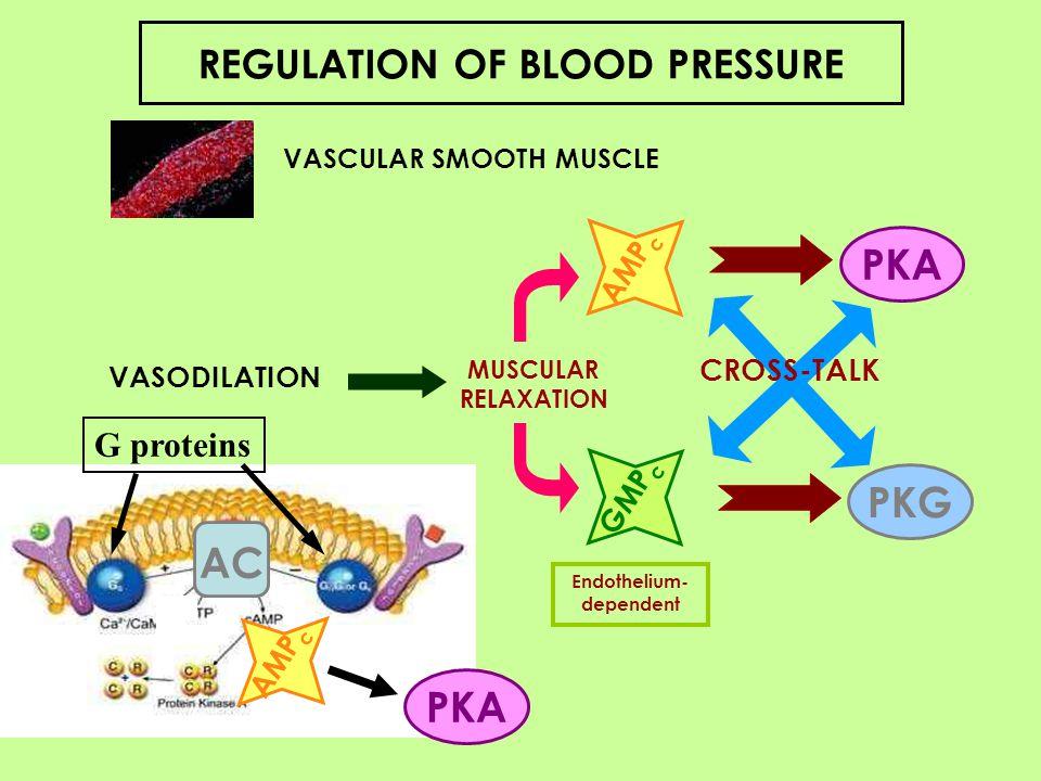 How Oleic Acid in olive oil reduces blood pressure.