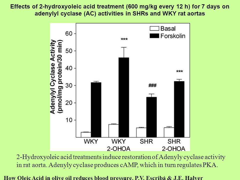 Effects of 2-hydroxyoleic acid treatment (600 mg/kg every 12 h) for 7 days on adenylyl cyclase (AC) activities in SHRs and WKY rat aortas How Oleic Ac