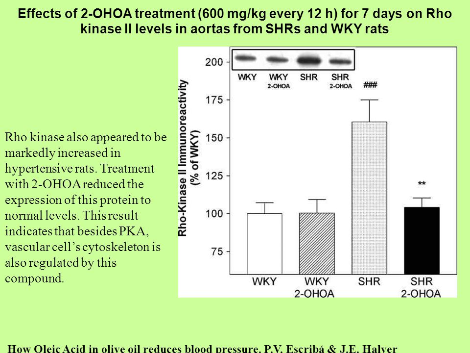 Effects of 2-OHOA treatment (600 mg/kg every 12 h) for 7 days on Rho kinase II levels in aortas from SHRs and WKY rats How Oleic Acid in olive oil red
