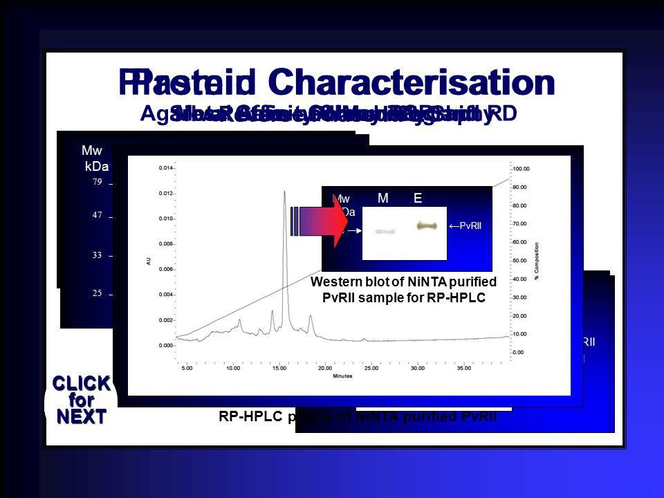 9.416 6.557 4.361 2.027 1.353 1.078. ~1 kb Mw 1 2 3 4 5 6 7 8 9 kb Colony PCR screening for pAcR2H 9.416 6.557 4.361 2.027 1.353 1.078 Mw 1 2 3 ~1 kb