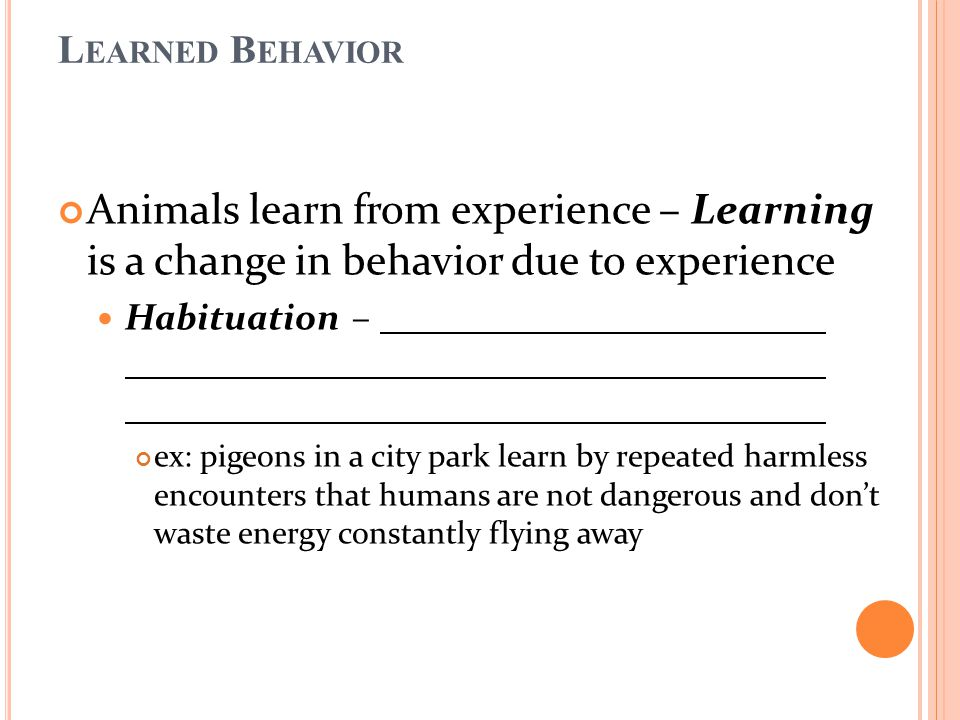 Animals learn from experience – Learning is a change in behavior due to experience Habituation – ex: pigeons in a city park learn by repeated harmless encounters that humans are not dangerous and don't waste energy constantly flying away L EARNED B EHAVIOR