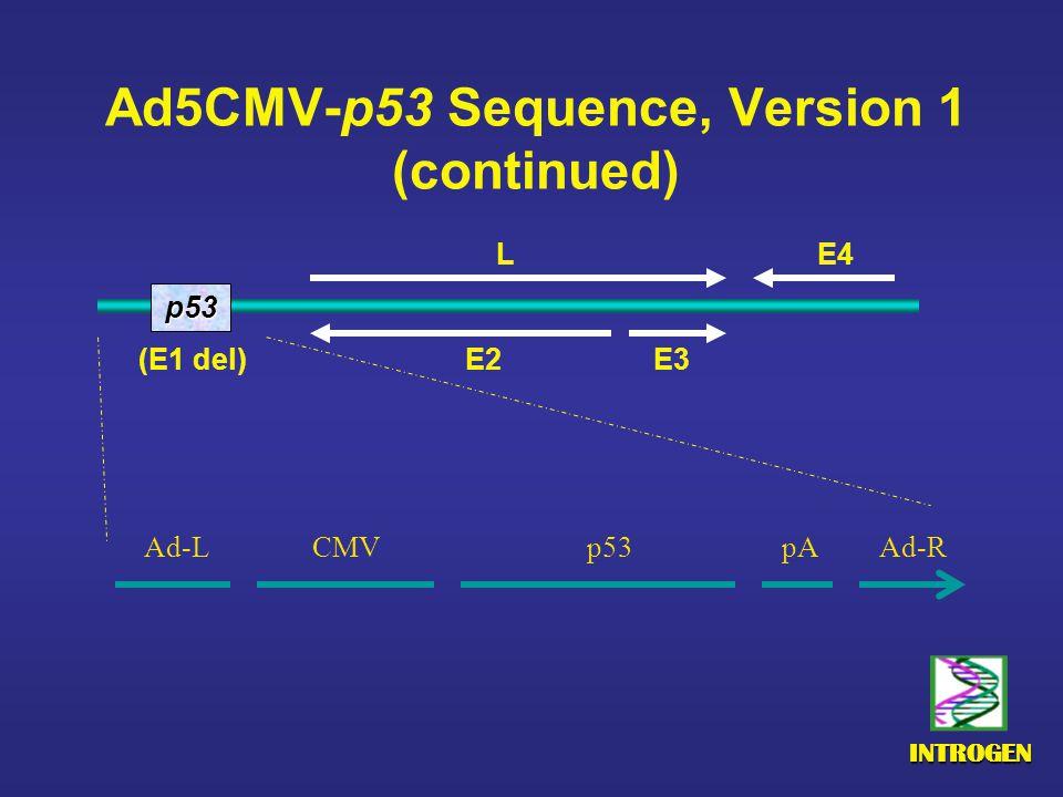 INTROGEN Ad5CMV-p53 Sequence, Version 1 (continued) Ad-LCMVp53pAAd-R p53 E4 E2 E3 (E1 del) L