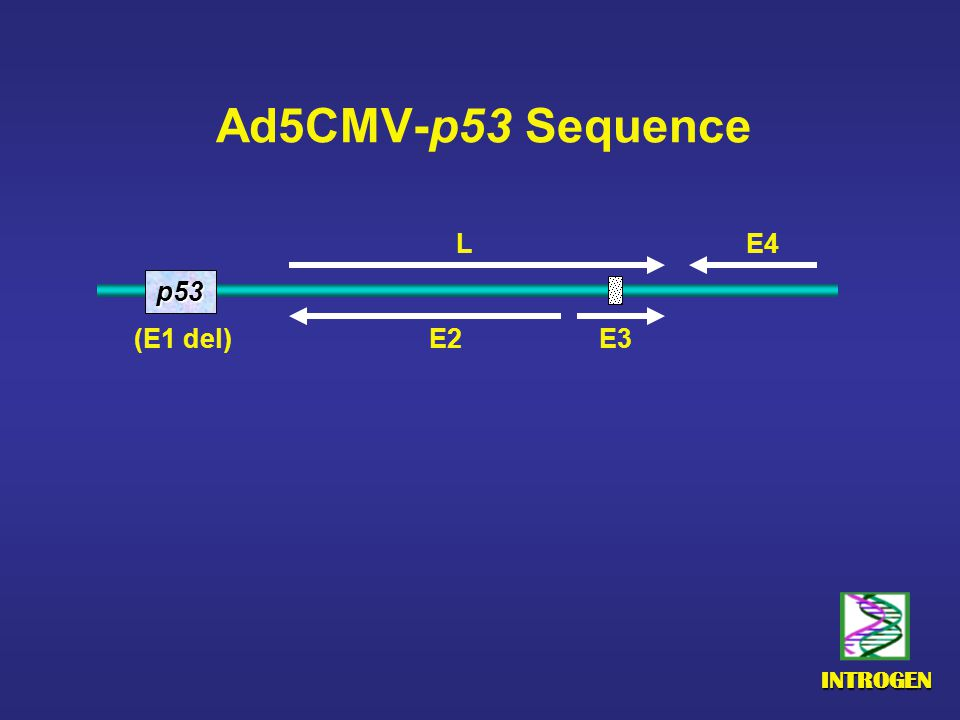 INTROGEN Ad5CMV-p53 Sequence p53 E4 E2 E3 (E1 del) L
